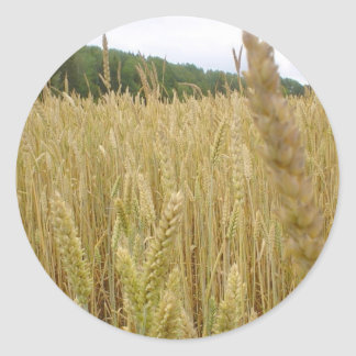 Wheat Seed Classic Round Sticker