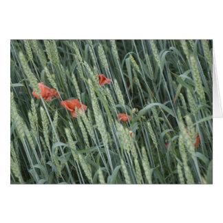 wheat stripes_1 card