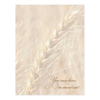 Wheat You Were Born to Stand Out Postcard