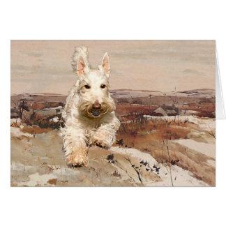 Wheaten Scottish Terrier Greeting Card