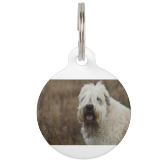 wheaten-terrier 2 pet tag