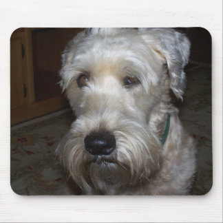 Wheaten Terrier Mouse Pad
