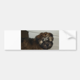 Wheaten_terrier puppy bumper sticker