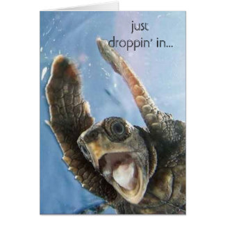 wheeeeeeeee turtle, just droppin' in... card