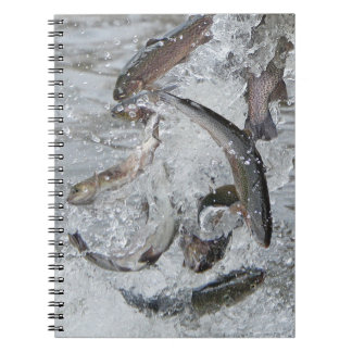 When Conservation Stocks The Lake! Notebook