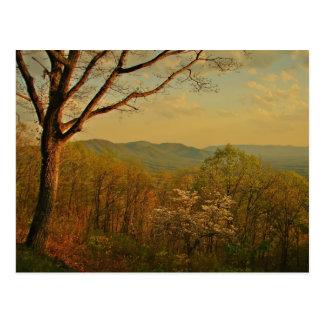 when the Blue Ridge is warm Postcard