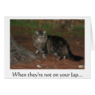 When they're not on your lap... greeting card