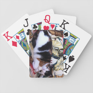 Where Is The Kitty Bicycle Deck of Cards