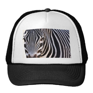 Where Is The Zebra? Hats