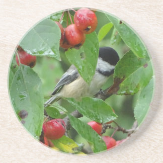 Where's Chickadee? Coaster
