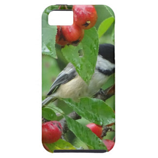 Where's Chickadee? iPhone 5 Case