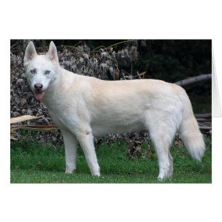 Whhite Siberian Husky note card