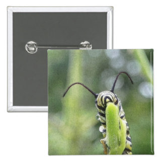 Whimsical Young Monarch Butterfly Caterpillar 2 Inch Square Button