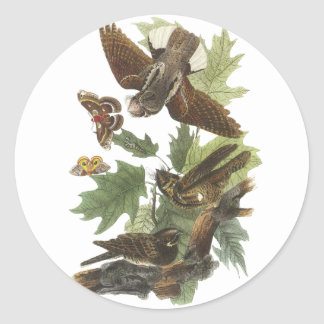 Whip-poor-will, John Audubon Round Sticker