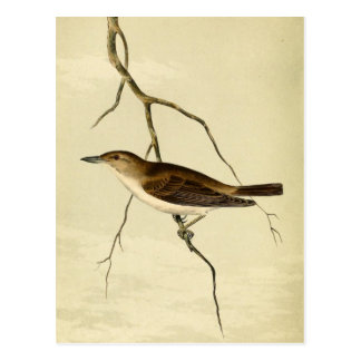 Whip Tom Kelly Vireo Postcard