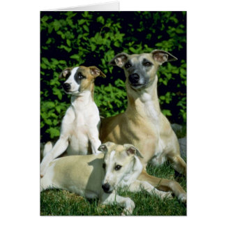 Whippet and pups card