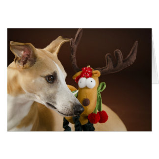 Whippet at Christmas Card