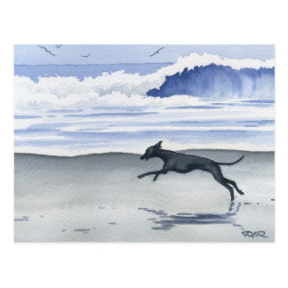 Whippet At The Beach Postcard