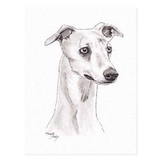 Whippet Dog Art Postcard