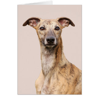 Whippet dog beautiful photo blank greetings card
