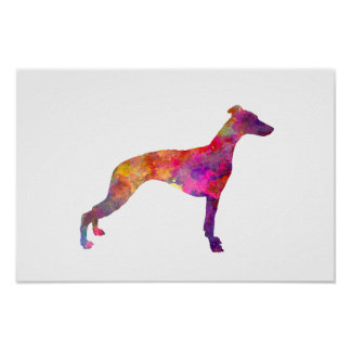Whippet in watercolor poster