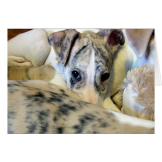Whippet puppy notecard