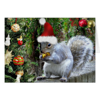 Whiskas the Squirrel Christmas Card