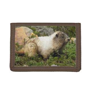 Whistling Marmot Photo Tri-fold Wallet