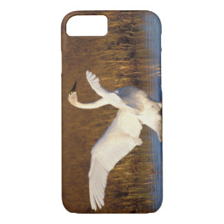whistling swan, Cygnus columbianus, stretching iPhone 7 Case
