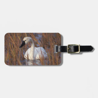 Whistling swan swimming in a pond, 1002 Coastal Bag Tag