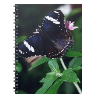White Admiral Butterfly Notebooks