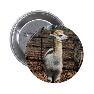 White Adult Alpaca - Vicugna pacos Pin