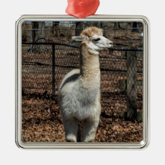 White Adult Alpaca - Vicugna pacos Silver-Colored Square Ornament