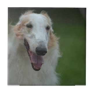 White Afghan Hound Ceramic Tiles