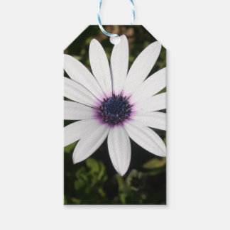 White African Daisy Gift Tags