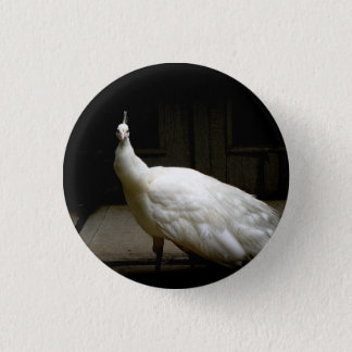 White Albino Peacock 1 Inch Round Button