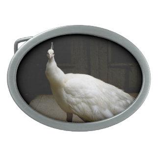 White Albino Peacock Oval Belt Buckle