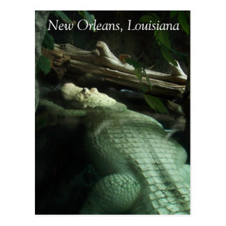 White Alligator of Louisiana Postcard
