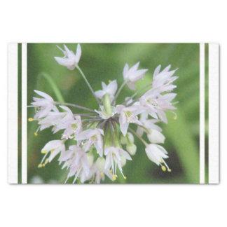 White Allium Tissue Paper