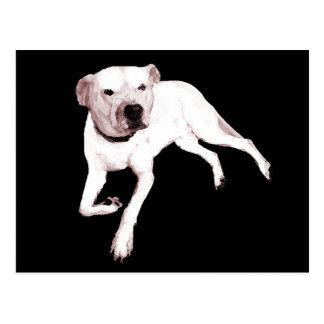 White American Pitbull Terrier Postcard