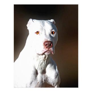 White American Pitbull Terrier Rescue Dog Letterhead