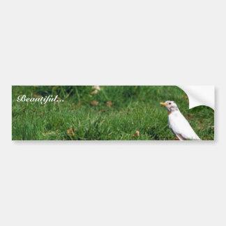 White American robin Bumper Sticker