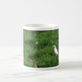 White American robin Coffee Mugs