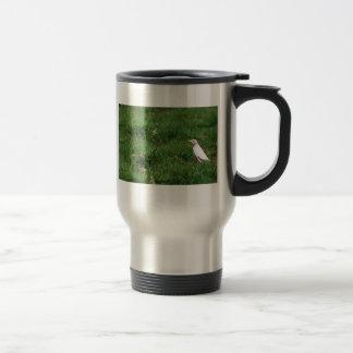 White American robin Mug