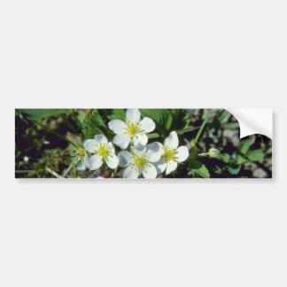 white American Strawberry (Fragaria Vesca Var. Ame Bumper Sticker