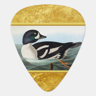 White and Black mallard ducks swimming in water Guitar Pick