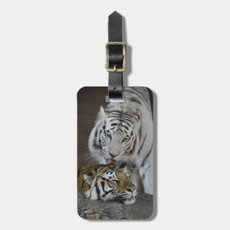 White And Brown Tigers Resting Luggage Tag
