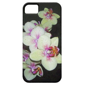 white and pink orchid iPhone 5 case