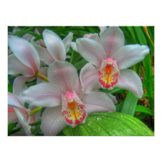 White and Pink Orchids COLOSSAL size Poster