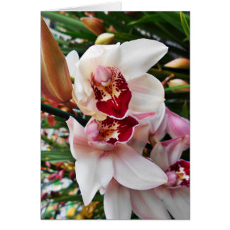 White and Pink Phalaenopsis Orchid Card